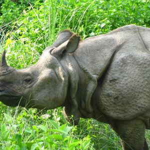 chitwan-jungle-safari05-300×300